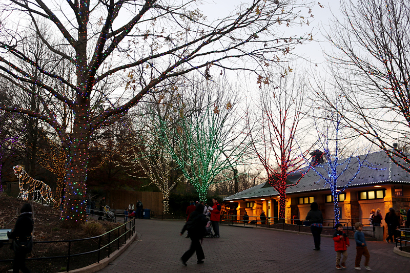 National Zoo Christmas lights Washington, D.C.